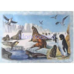 Carta di riso disegnata per decoupage con trichechi, pinguini e foche